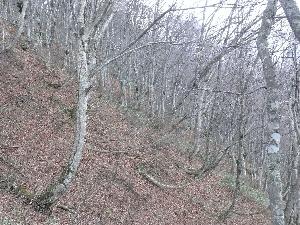 ブナ林の冬景色