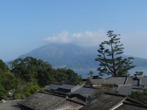 桜島とヤクタネゴヨウ