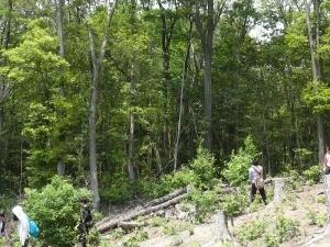 実習地の伐採地と二次林