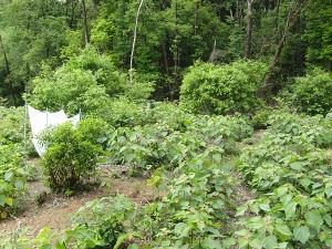 伐採・落ち葉掻き区